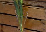Vase oder Dekanter es aknn beides sein